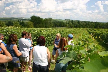 Représentation du Vignoble Les Côtes du Galet