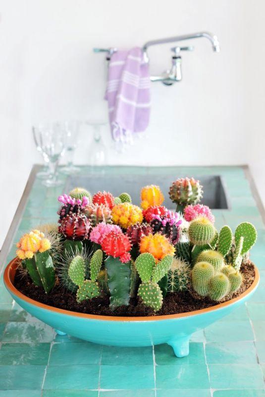 Arrangement multicolor de mini cactus