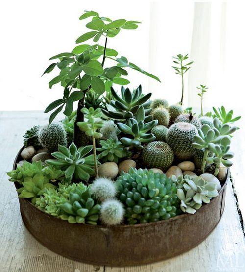 Arrangement de cactus et mini plantes vertes
