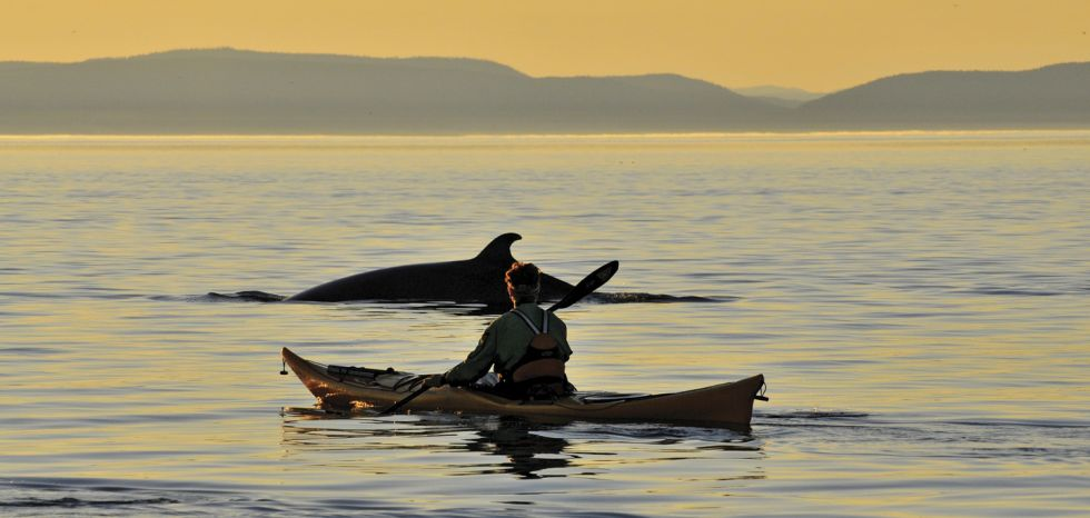 Excursion au baleine en kayak