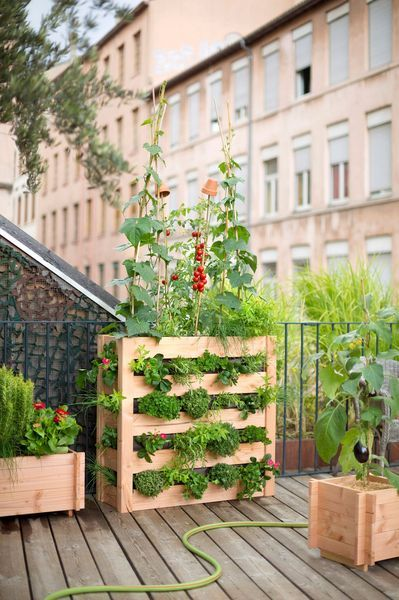 Trucs Et Astuces Pour Reussir Votre Jardin Urbain