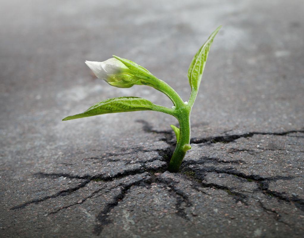 Image d'une pousse de plante dans une entrée d'asphalte qui se fissure