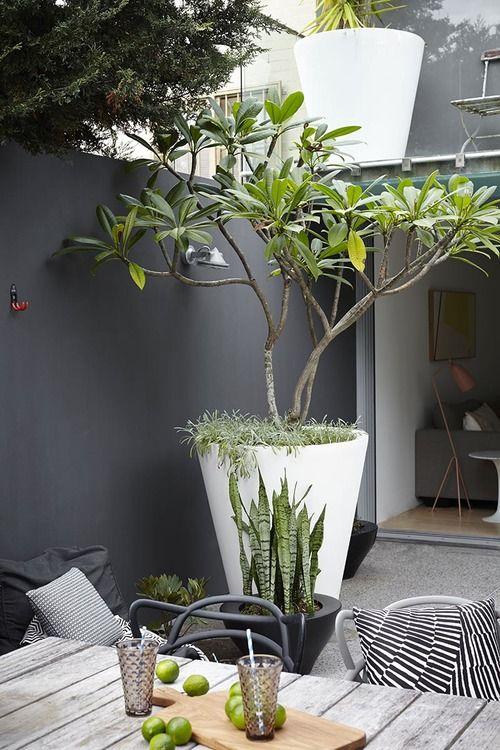 Pot à arbuste géant