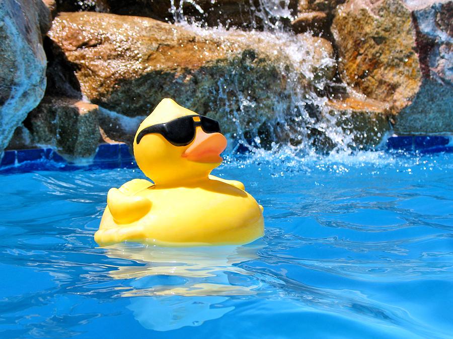 Piscine avec jouet flottant en forme de canard sur fond de chute