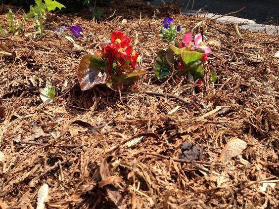Jardins avec paillis de lin et feuilles mortes