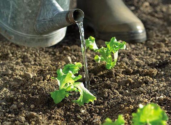 Arrosoir et jardin bien irrigé