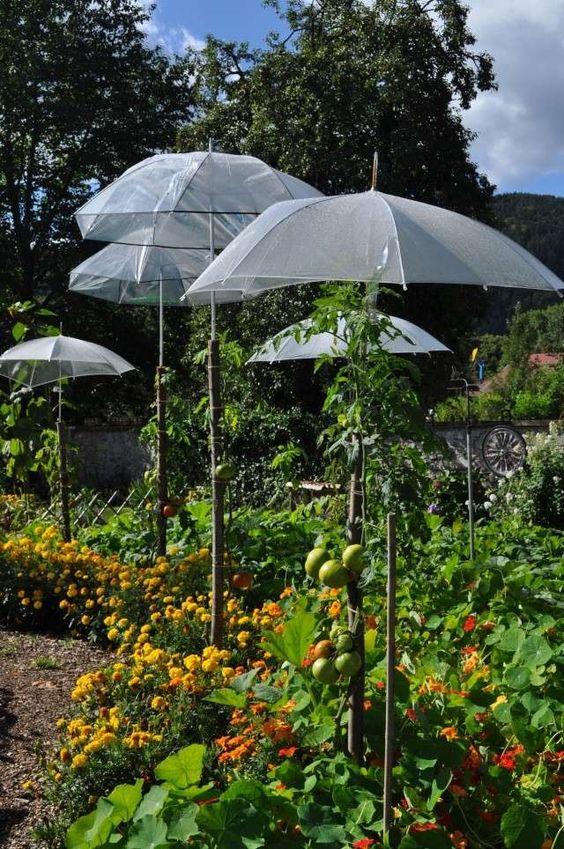 Beau grand jardin de plants et fleurs avec grand plant de tomates variées