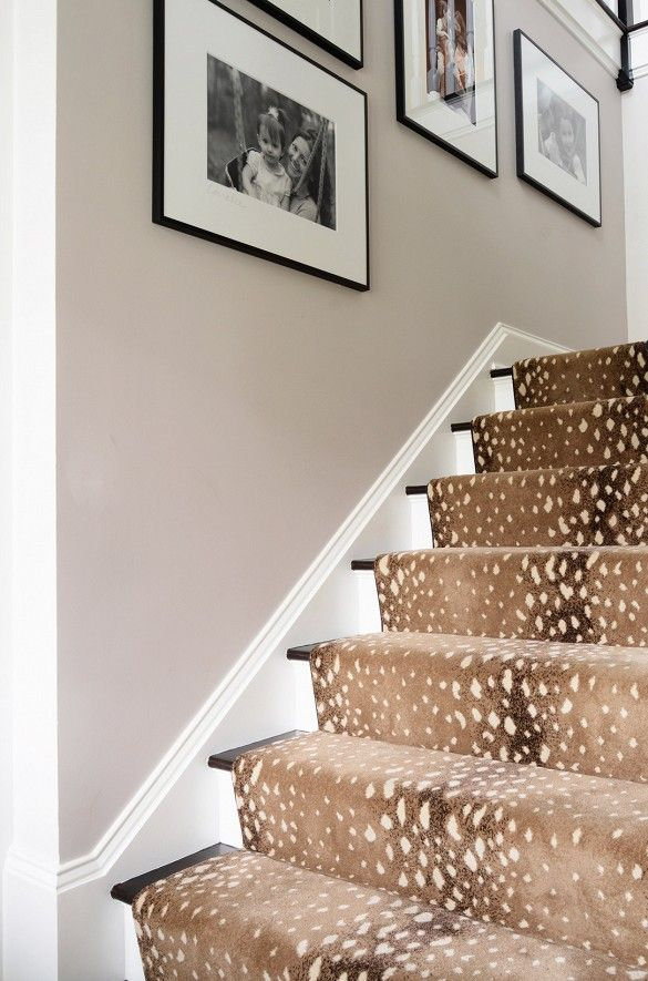 Cage d'escalier avec tapis à motif de léopard