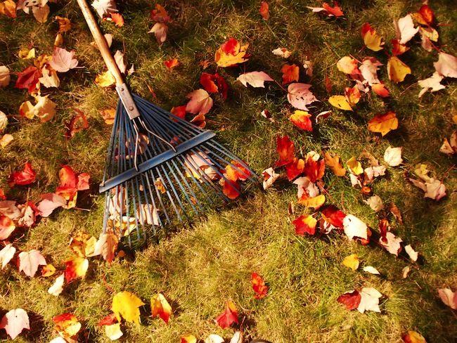 Rateau sur pelouse avec feuilles d'automne