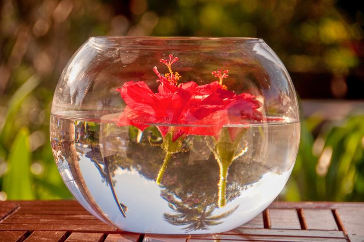 Vase translucide / transparent