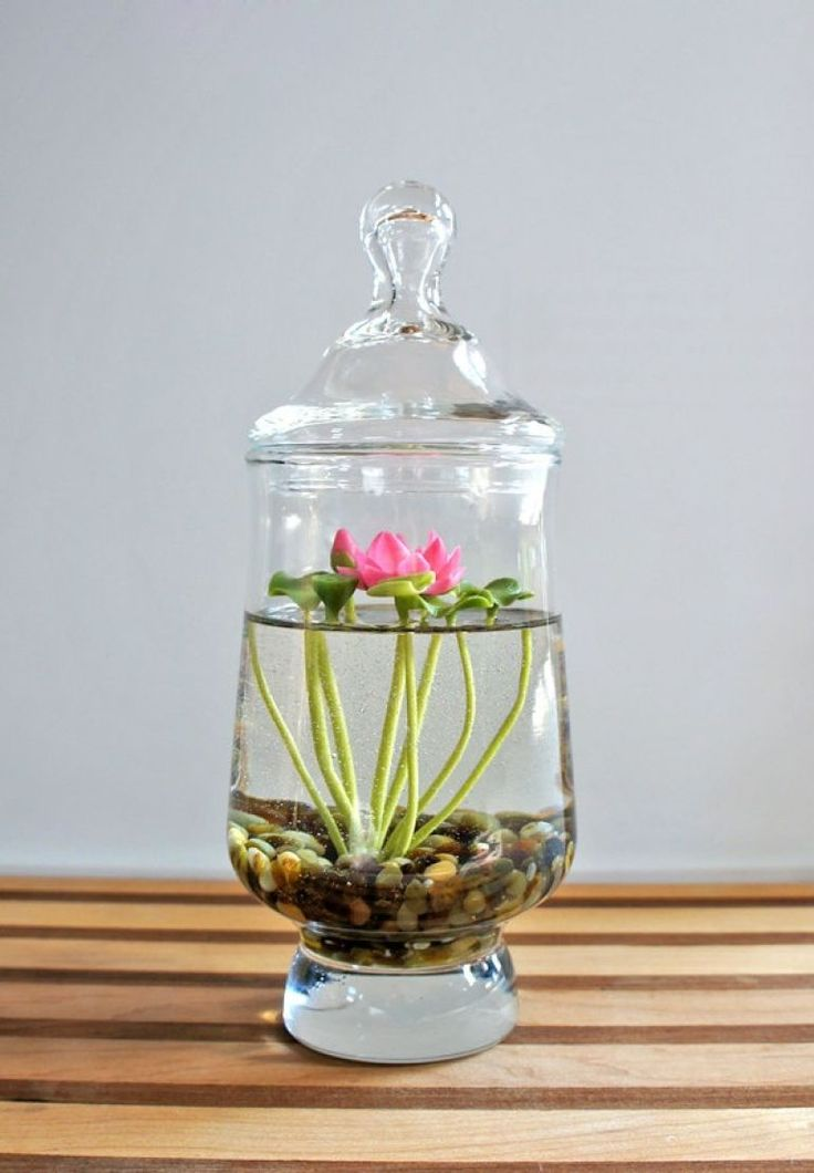 Plante aquatique dans jolie vase en verre