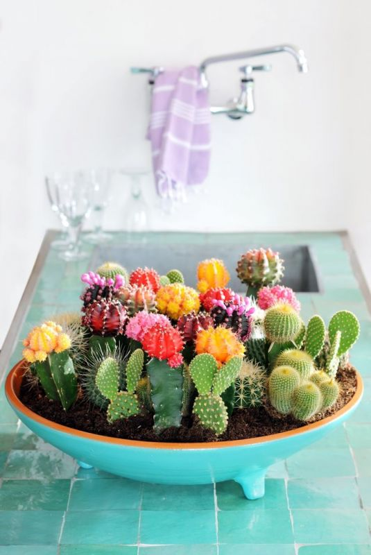 Arrangement multicolor de mini cactus