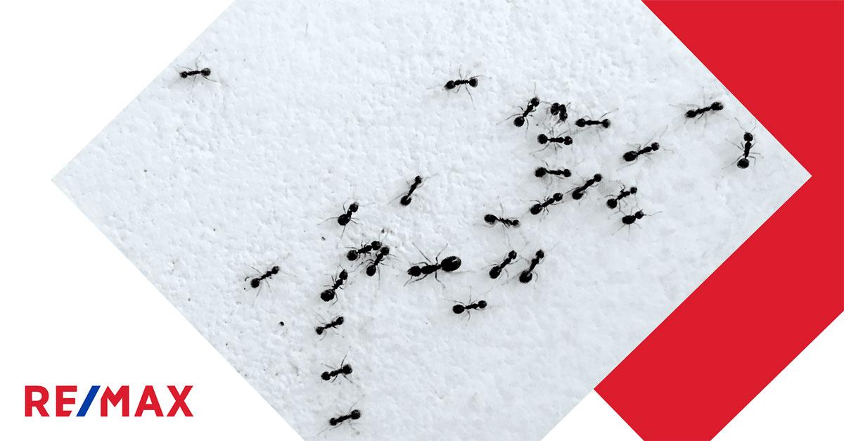8 astuces pour se débarrasser des fourmis