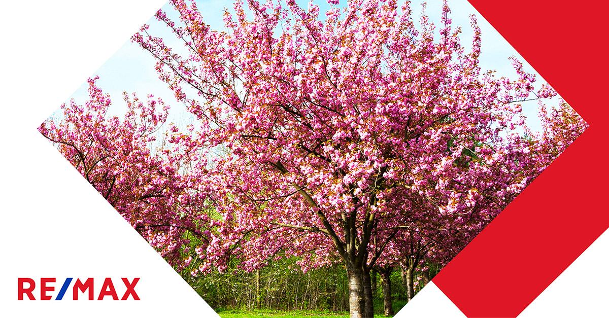 Arbres et arbustes : lesquels choisir pour une petite cour?