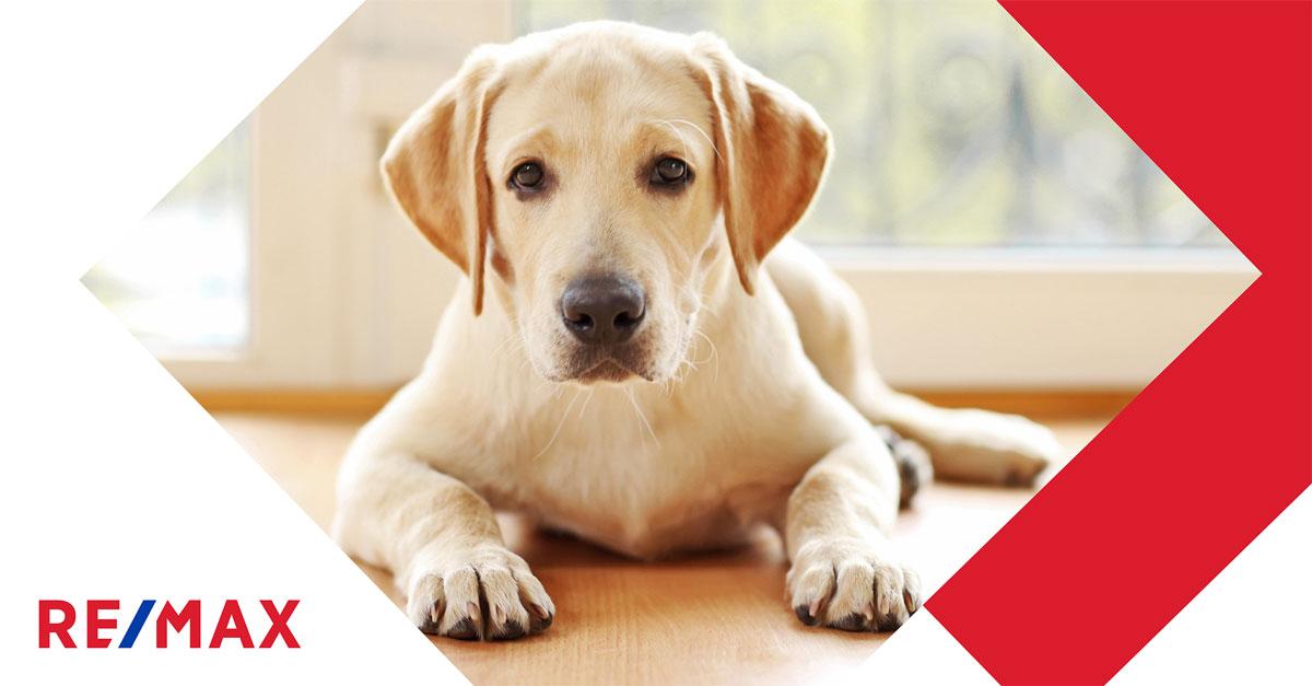 Visites : Comment présenter une maison impeccable avec un chien?
