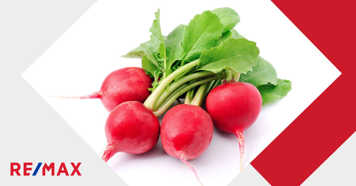 5 légumes faciles à cultiver au potager