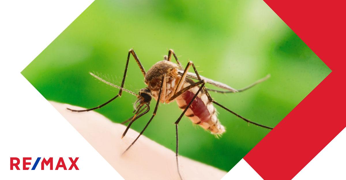 6 astuces (naturelles… ou pas!) pour éloigner les moustiques